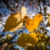 brian-hirschy-photography-fall-photography-2012-6-of-20